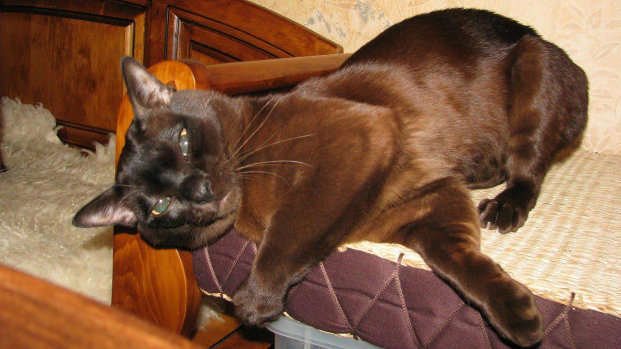 Объявления о продаже кошек и котят в уфе на avito.