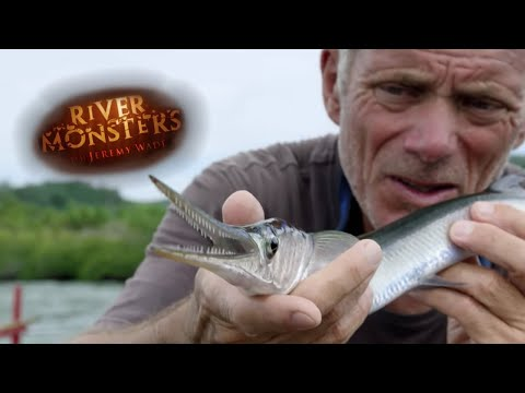 Can Jeremy Catch A Needlefish? | NEEDLEFISH | River Monsters