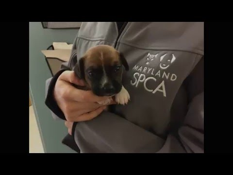 16 Puppies and Dogs at Maryland SPCA Need Help!