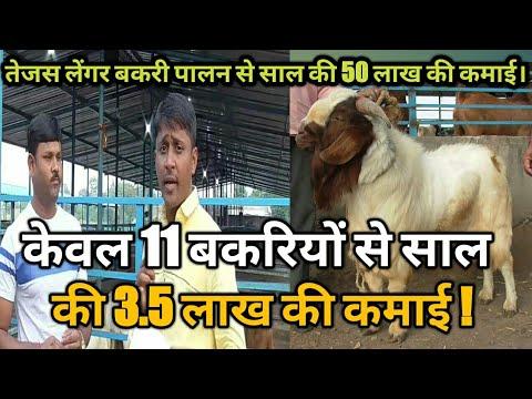 केवल 11 बकरियों से 3 5 लाख की कमाई !।goat farming information in  hindi।success story