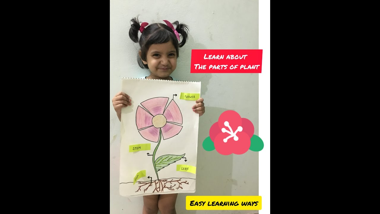 learn about the parts of the plant