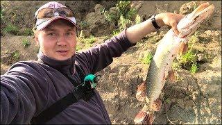 Рыбалка на щуку с берега Крупная рыба Лёгкий спиннинг Первая рыбалка с Crazy Fish Arion 762S L