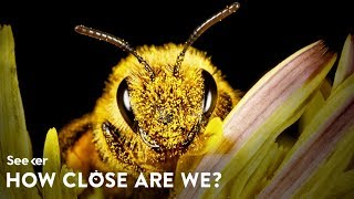 how-close-are-we-to-saving-the-bees