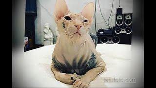 Побег татуированного кота - весь Екатеринбург ищет кошку с тюремными тату - tatufoto.com