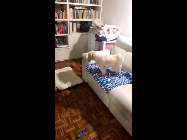 Cane che gioca a pallavolo - Corriere Quotdiano