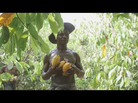 Faces of Africa - Cocoa to Cash in Cote d'Ivoire