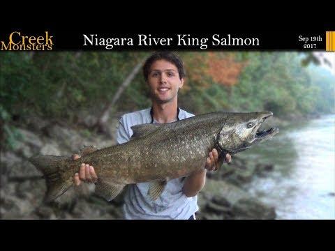 Lower Niagara River Devils Hole Salmon