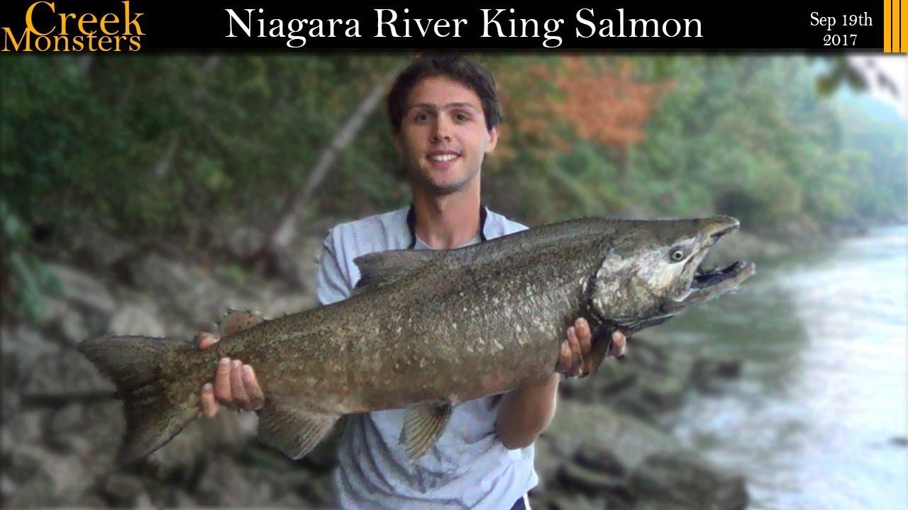 Lower niagara river devils hole salmon youtube for Lower niagara river fishing report