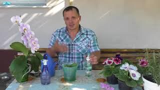 Орхидея. Цветущая 'детка' орхидеи через год после отделения - что делаем.