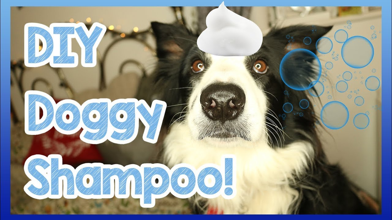 How to Make Your DIY Dog Shampoo for