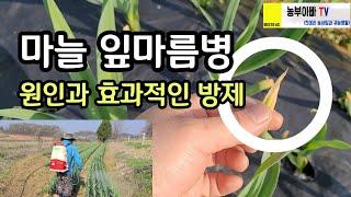 마늘 잎마름병 원인과 효과적인 방제 방법