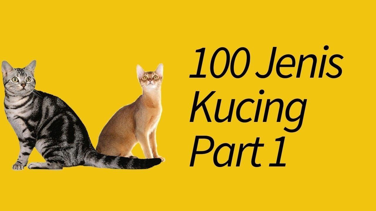 100 Jenis Kucing Di Dunia Paling Lengkap Meowcitizen