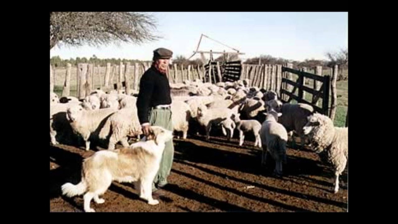 Circuito Productivo De La Lana : Circuito productivo la lana youtube