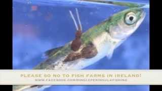 Say no to Fish Farms in Ireland