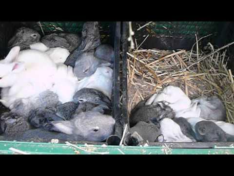 Клетки для кроликов маточники