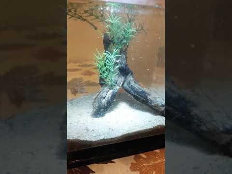 DIY Aquarium Drift Wood Adding Fake Plants Decorations