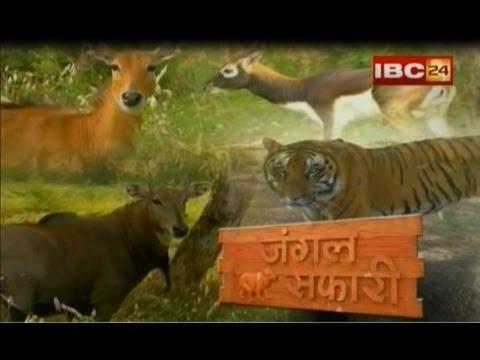 24 vibio net zoo video