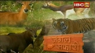 Repeat youtube video JUNGLE SAFARI NEW RAIPUR - IBC24
