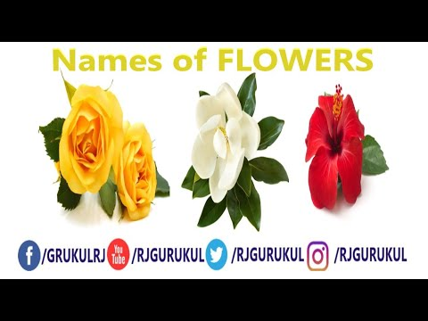 RJ Gurukul (गुरुकुल) :- Learn Flowers Name for Kids | Flowers Name in English |