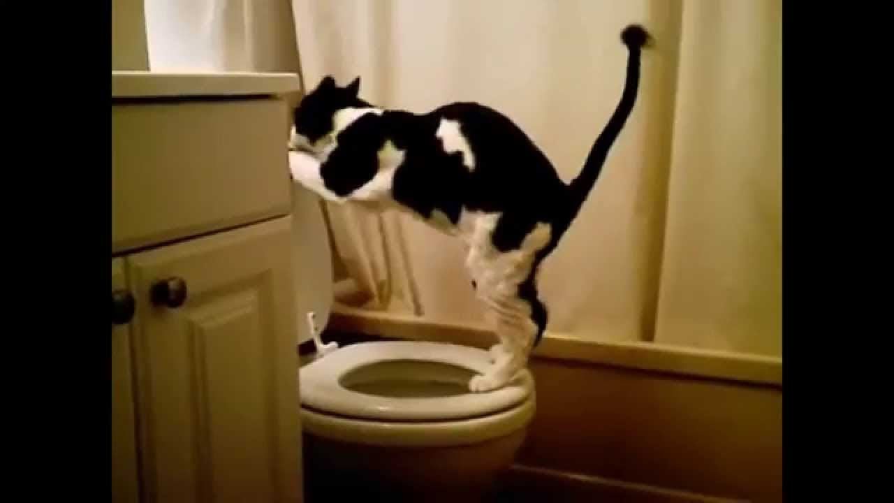 Котки Забавно Видео Компилация