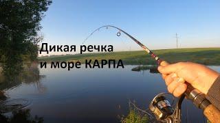 Рыбалка на поплавок на дикой речке Жесть море КАРПА Карп крадет удочки
