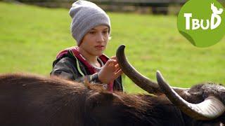 Schwarze Büffel (Folge 80) | Tiere bis unters Dach | SWR Kindernetz