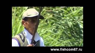 Рибалка в Японії і бонус