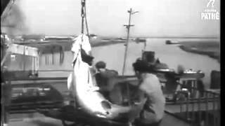 Рыбный промысел Гурьева (Атырау)
