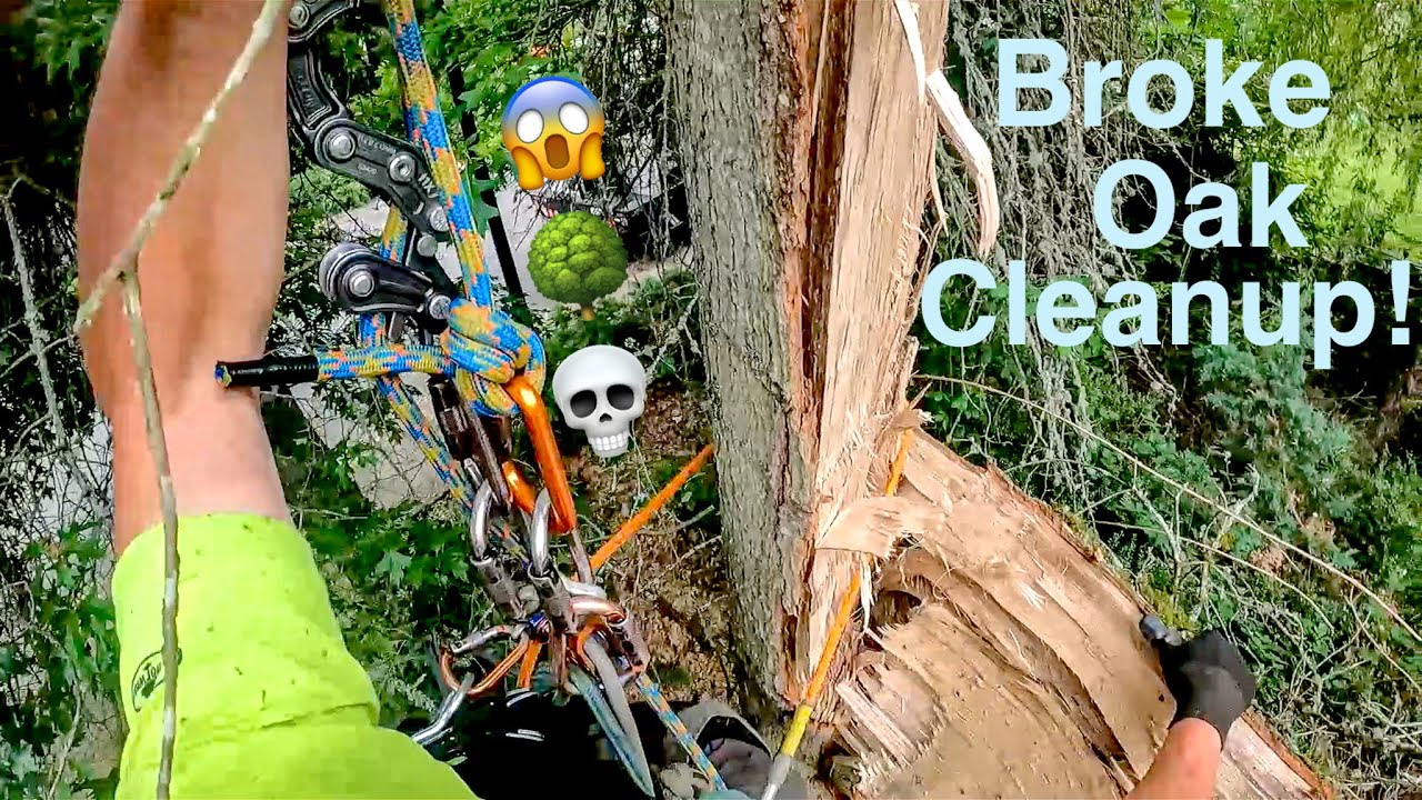 Broke Oak Cleanup! Tree almost hits house, New intro and Kevin tries a Mango for the first time!