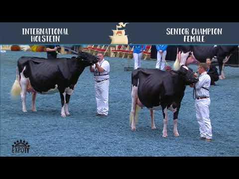 766   Holstein   Senior Champion Female