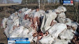 Кости животных обнаружили жители поселка Тула недалеко от жилых домов