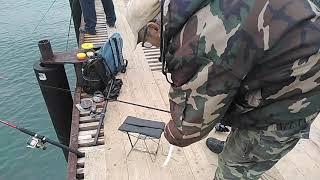 Рыбалка в Анапе 2020 9 ноября Сарган на Центральном пляже