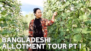 BANGLADESHI ALLOTMENT TOUR & VEGETABLE HARVEST ~ PART 1 #Bangladeshi #BangladeshiGarden