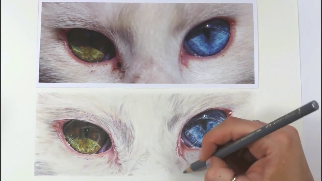 Tutorial #5: 1 Hour Tutorial On How To Draw A Cats Eyes Channel Sheldene  Fine Art