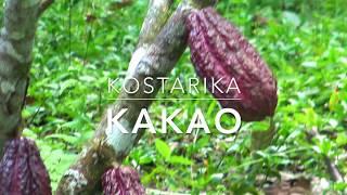 Kakao | Kostarika