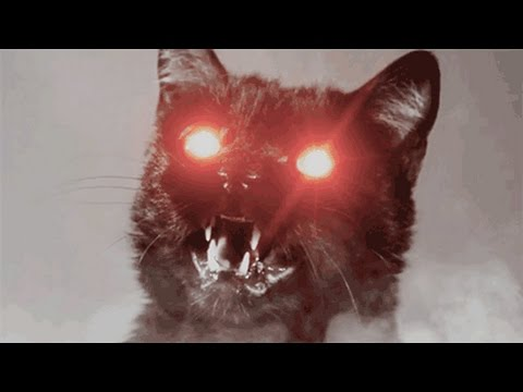 """Ghosts And Spirits: (GHOST OF THE WEEK) """"DC"""", The Demon Cat Of Washington, D.C."""