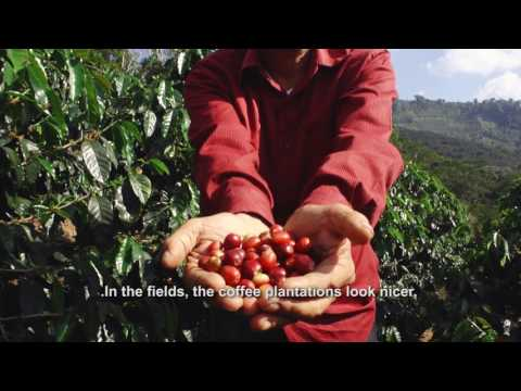 Small Coffee Producers from Honduras Strengthened with Canadian Support
