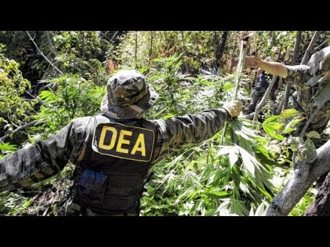 How to Become a DEA Agent