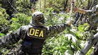 Tips on Becoming a DEA Agent