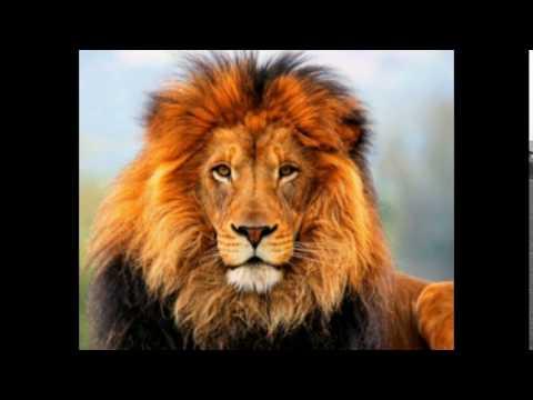 ruggito leone mp3 da