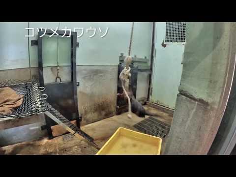 福岡市動物園:お出かけない。。。。動物園完全版