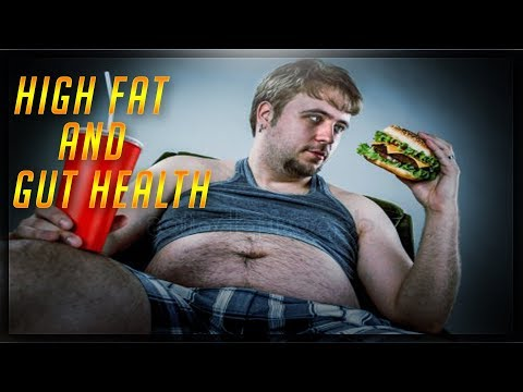 high-fat-&-the-importance-of-gut-health