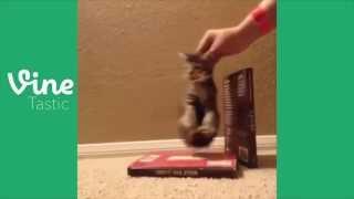 TheRealVinetastic - Wrecking Ball Kitten Edition