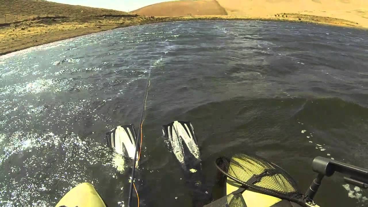 fly fishing south africa pdf