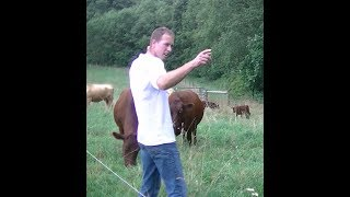 Why Grass Fed Beef? - In Field - (part 5)