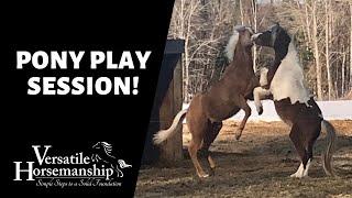 🔴 PONY PLAY SESSION! (live-stream) // Versatile Horsemanship