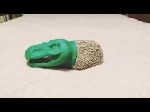 tyrannosaurus hedgehog