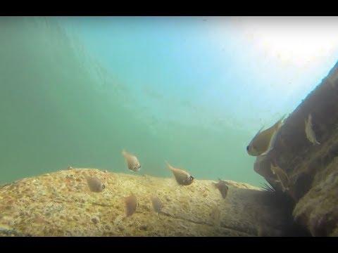 Freediving Bushrangers Bay Bass Point ShellHarbour - YouTube