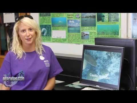 Monitoring of Bermuda's Coral Reefs