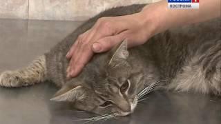 Костромские ветеринары призывают владельцев домашних животных срочно привить питомцев от бешенства